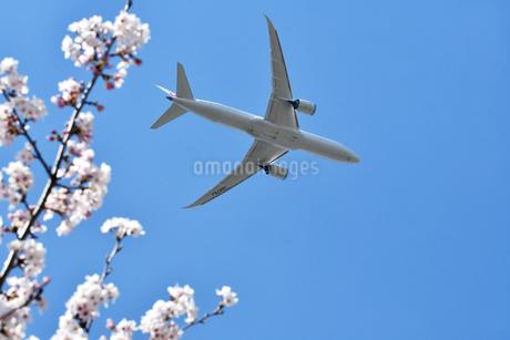 離陸した旅客機の写真素材 [FYI01252147]