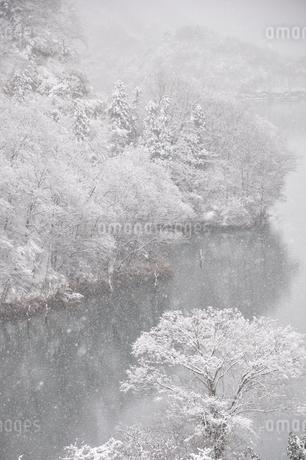 雪の降る湖畔の写真素材 [FYI01252161]