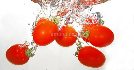 水中のミニトマトの写真素材 [FYI01252295]