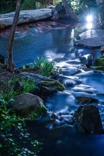 日本庭園を泳ぐ鯉のイメージの写真素材 [FYI01252305]