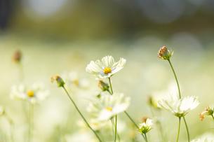 花と玉ボケの写真素材 [FYI01252306]