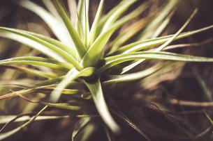 熱帯植物の写真素材 [FYI01252308]