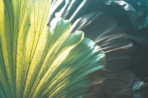 熱帯植物の写真素材 [FYI01252309]
