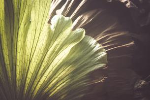 熱帯植物の写真素材 [FYI01252310]