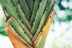 熱帯植物の写真素材 [FYI01252311]