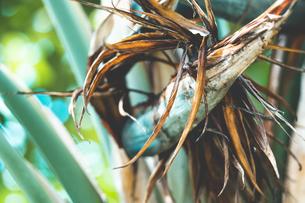 熱帯植物の写真素材 [FYI01252312]