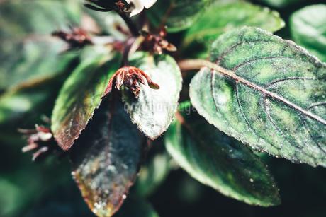 熱帯植物の写真素材 [FYI01252313]