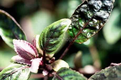 熱帯植物の写真素材 [FYI01252314]