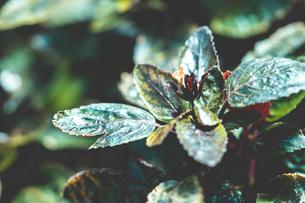 熱帯植物の写真素材 [FYI01252315]