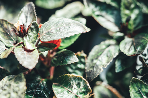 熱帯植物の写真素材 [FYI01252316]
