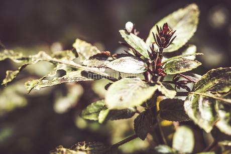 熱帯植物の写真素材 [FYI01252317]
