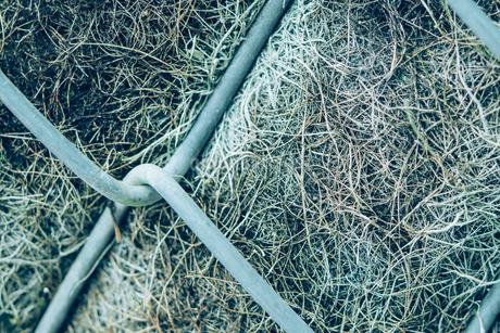 熱帯植物の写真素材 [FYI01252318]