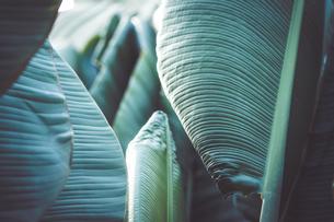 熱帯植物の写真素材 [FYI01252322]