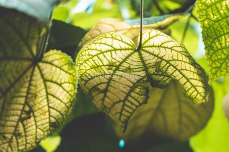 熱帯植物の写真素材 [FYI01252323]