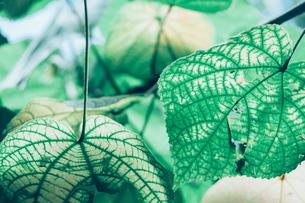 熱帯植物の写真素材 [FYI01252324]