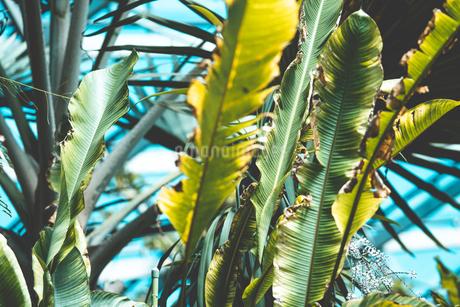熱帯植物の写真素材 [FYI01252325]