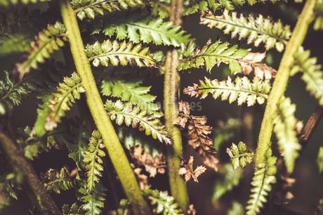 熱帯植物の写真素材 [FYI01252326]