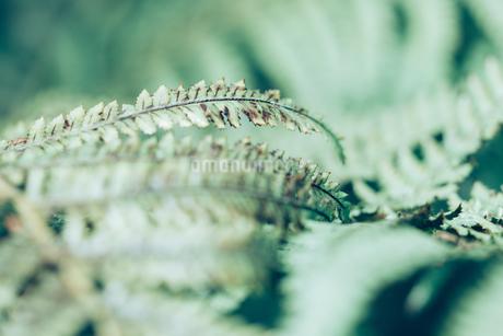 熱帯植物の写真素材 [FYI01252327]