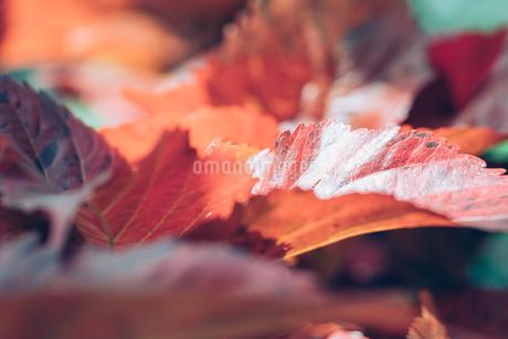熱帯植物の写真素材 [FYI01252328]
