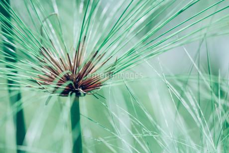 熱帯植物の写真素材 [FYI01252329]