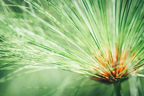熱帯植物の写真素材 [FYI01252330]