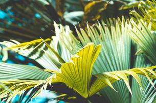 熱帯植物の写真素材 [FYI01252331]
