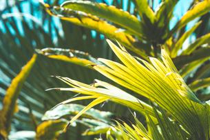 熱帯植物の写真素材 [FYI01252332]