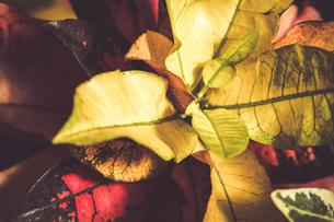 熱帯植物の写真素材 [FYI01252333]