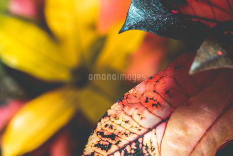 熱帯植物の写真素材 [FYI01252334]