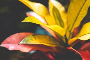 熱帯植物の写真素材 [FYI01252336]