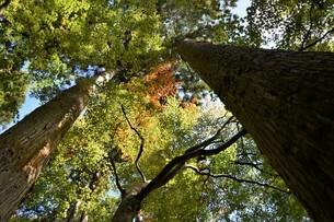 大木の写真素材 [FYI01252426]