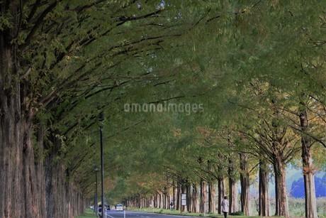 並木の写真素材 [FYI01252429]