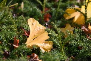 落葉の写真素材 [FYI01252436]
