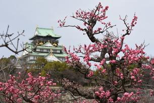 梅とお城の写真素材 [FYI01252453]