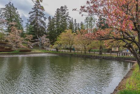 春の米沢城跡の風景の写真素材 [FYI01252463]