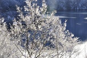 雪化粧した樹木の写真素材 [FYI01252520]