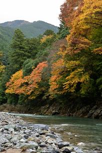 渓流と紅葉の写真素材 [FYI01252559]