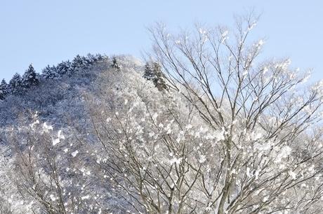 雪晴の朝の写真素材 [FYI01252576]