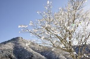 雪晴の朝の写真素材 [FYI01252579]
