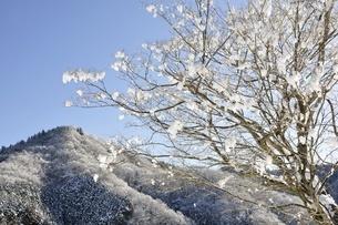 雪晴の朝の写真素材 [FYI01252580]