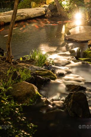 日本庭園を泳ぐ鯉のイメージの写真素材 [FYI01252582]