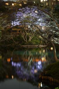 春の日本庭園のイメージの写真素材 [FYI01252583]