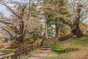 春の米沢城跡の風景の写真素材 [FYI01252751]