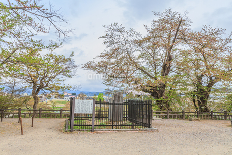 春の米沢城跡の祠堂遺跡の風景の写真素材 [FYI01252756]