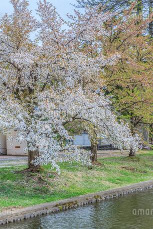 春の米沢城跡の風景の写真素材 [FYI01252759]