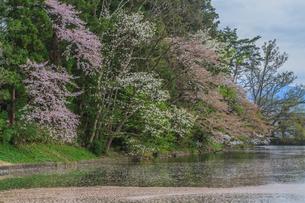 春の米沢城跡の風景の写真素材 [FYI01252767]