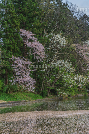 春の米沢城跡の風景の写真素材 [FYI01252768]