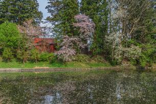 春の米沢城跡の風景の写真素材 [FYI01252772]
