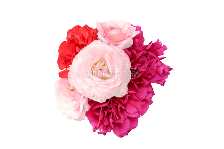 ラナンキュラスとカーネーションの花束の写真素材 [FYI01252790]