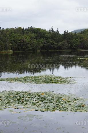 知床半島の風景 知床五胡の写真素材 [FYI01252849]